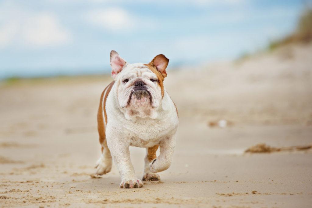 Dog-friendly beaches in San Diego